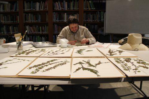 Hoyt Arboretum Herbarium