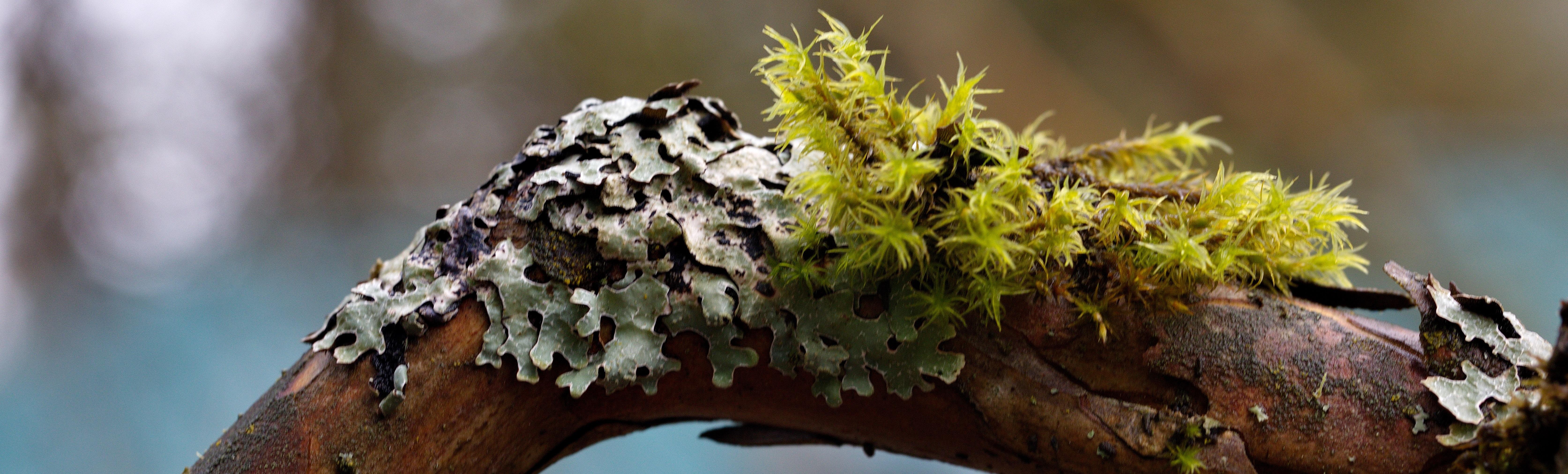 Lichens Identification – Virtual Workshop