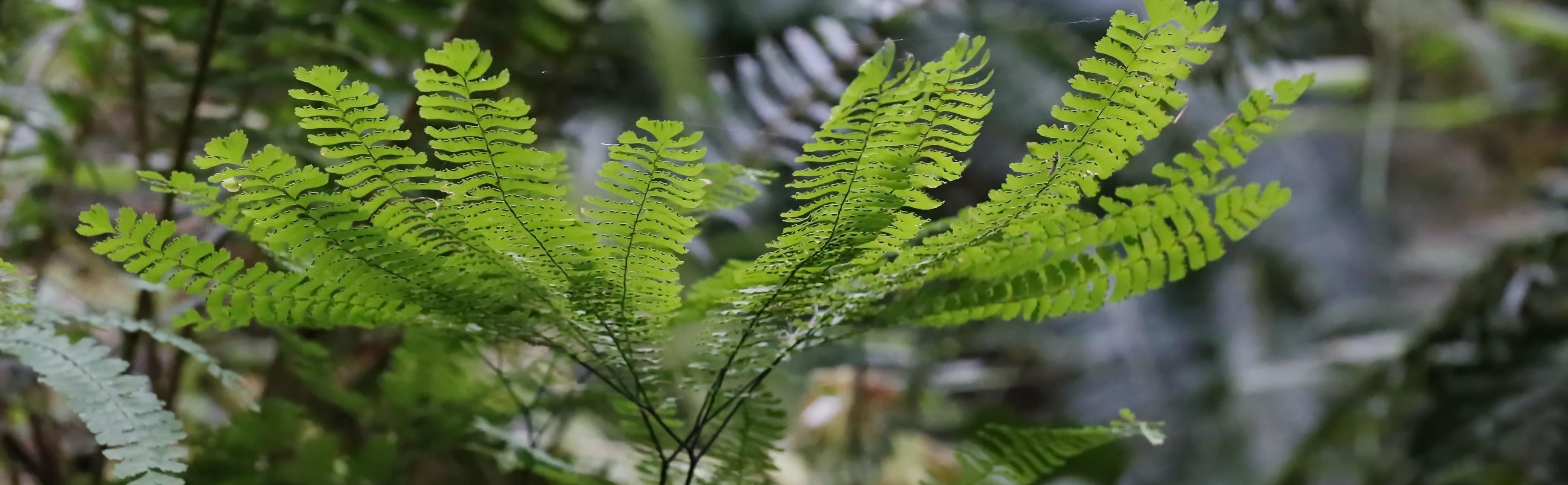 Public Tour – Pacific Northwest Native Plants