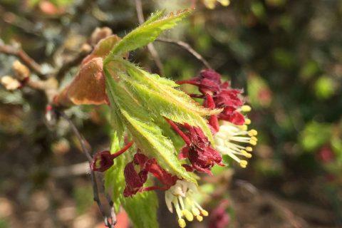 Online Plant Database