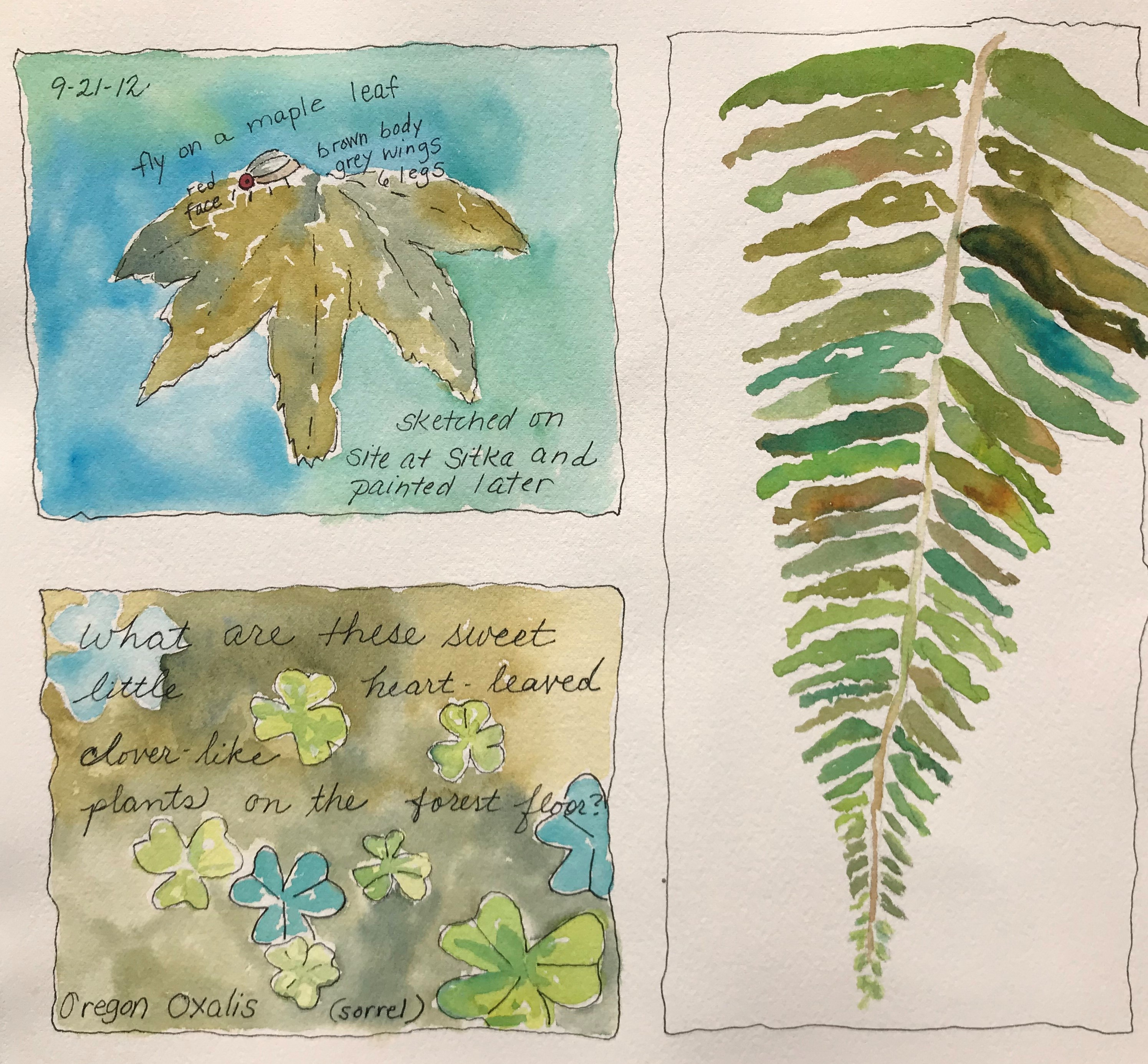 Nature Journaling with Watercolors (September Series)