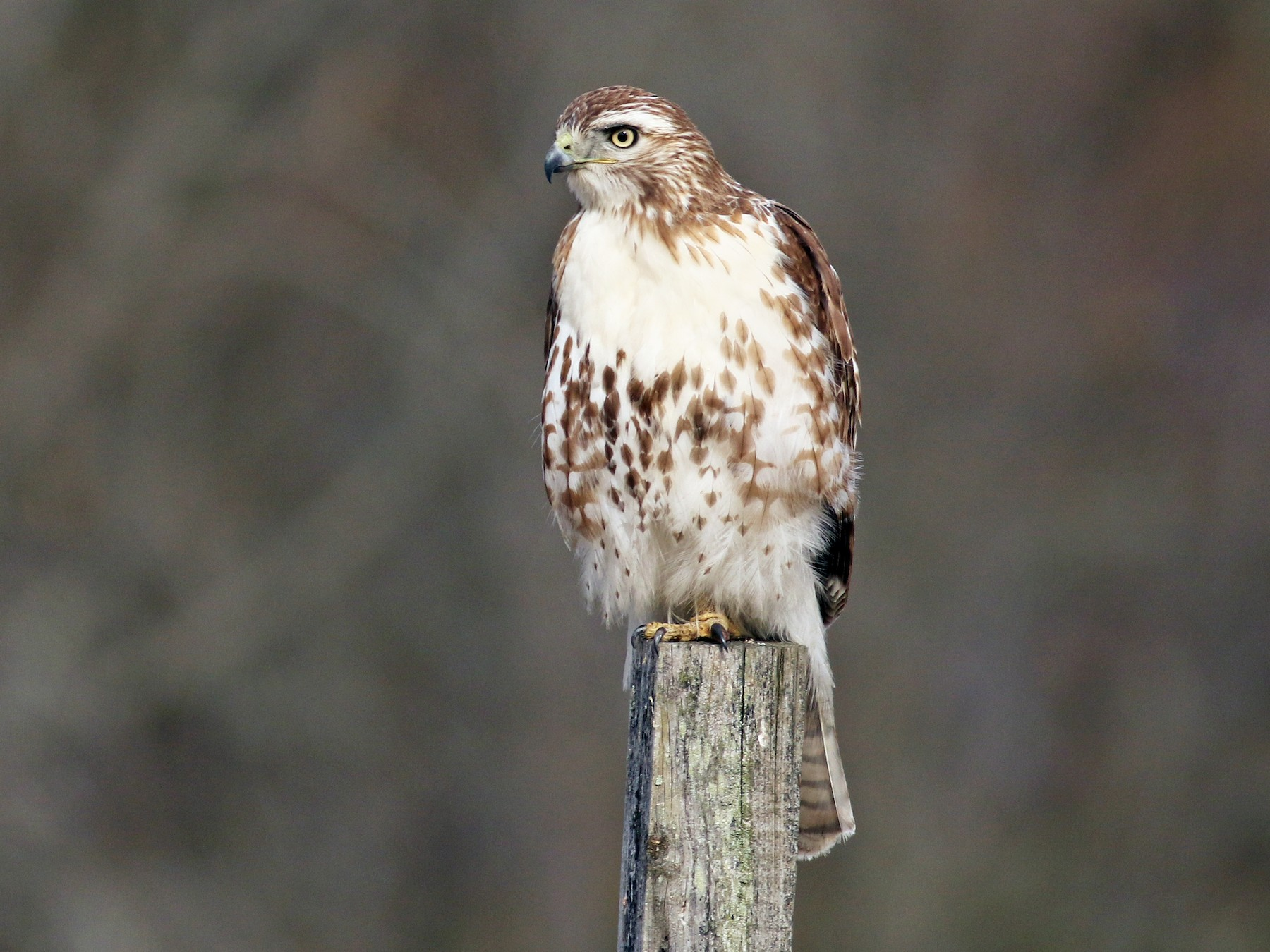 Birds of Prey Virtual Workshop-Winter Edition
