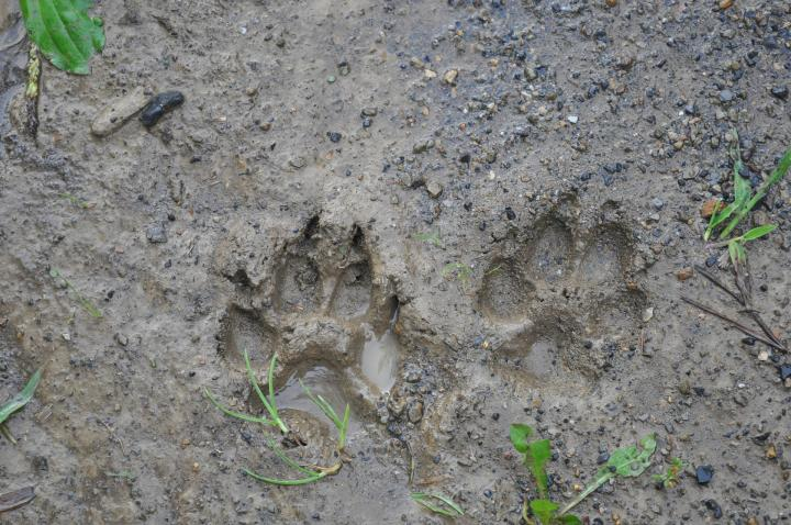 *CANCELLED* Wildlife Tracking Workshop