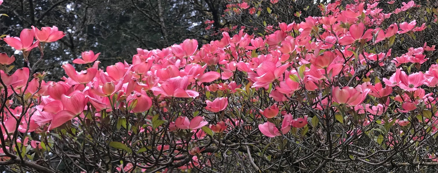 Tai Chi at Hoyt Arboretum