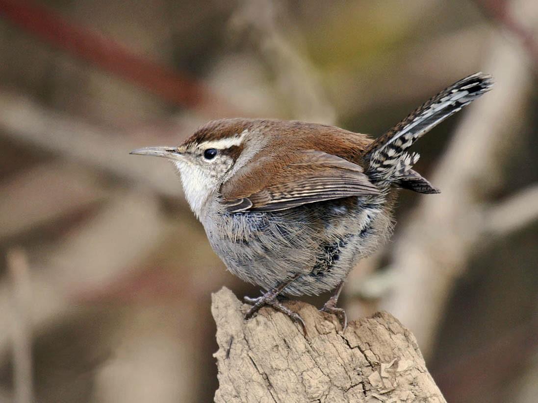 Fall Birding Tune-Up
