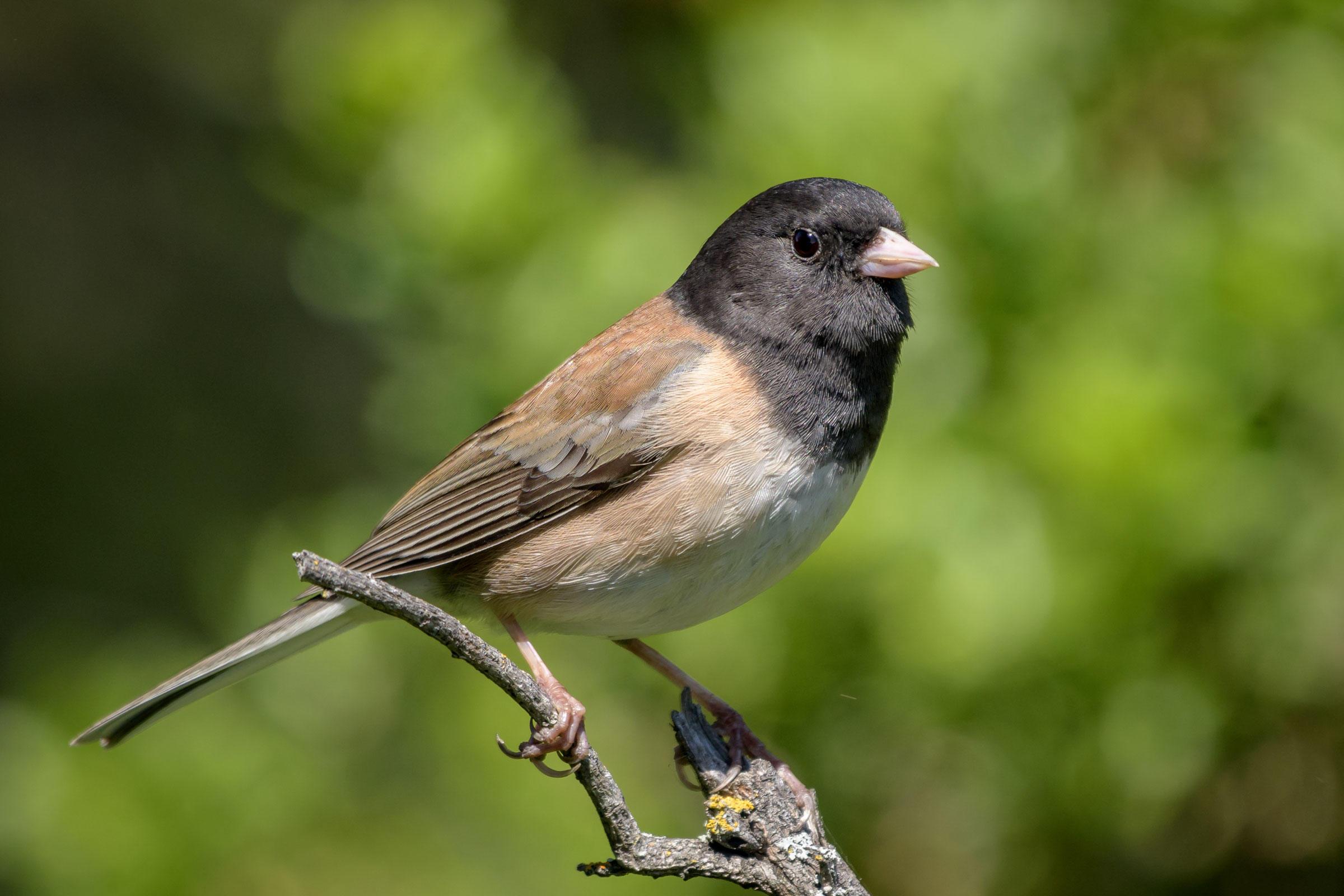 Virtual Little Brown Birds Workshop- Fall Edition!