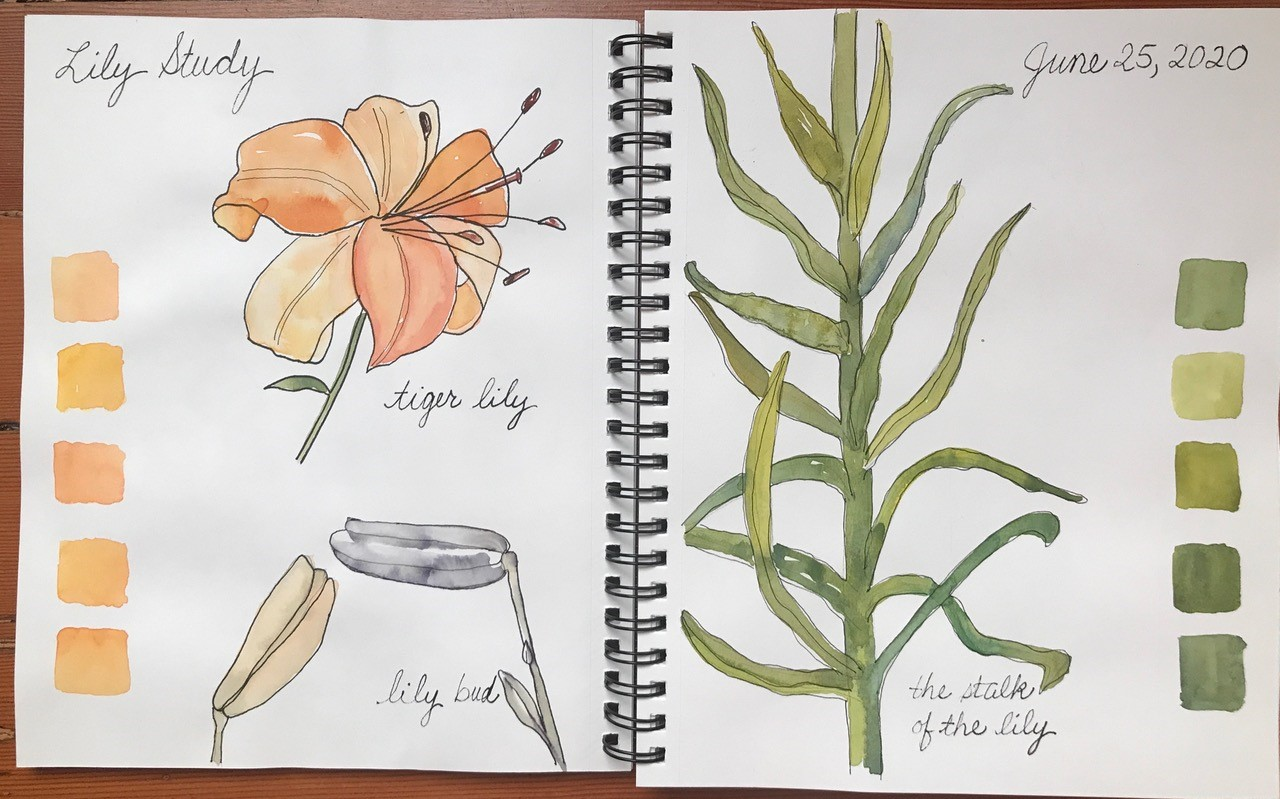 Virtual Nature Journaling Workshop