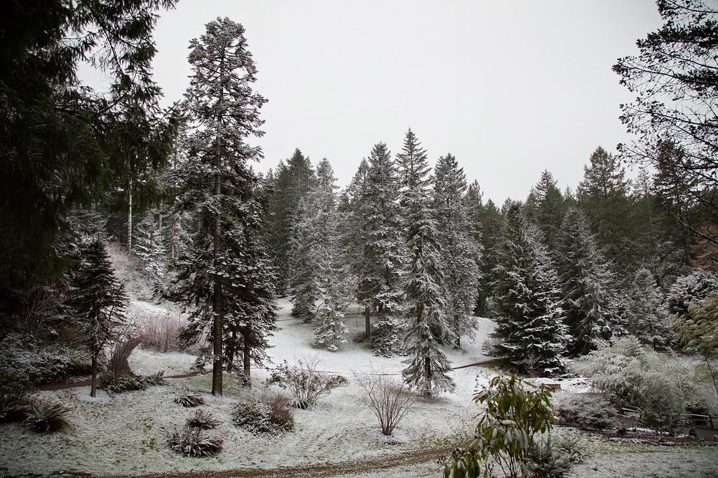 Christmas Trees of Hoyt Arboretum Virtual Presentation