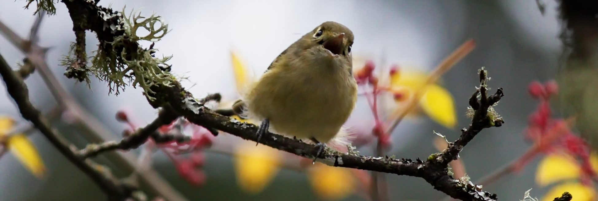 Little Brown Birds- Virtual Workshop