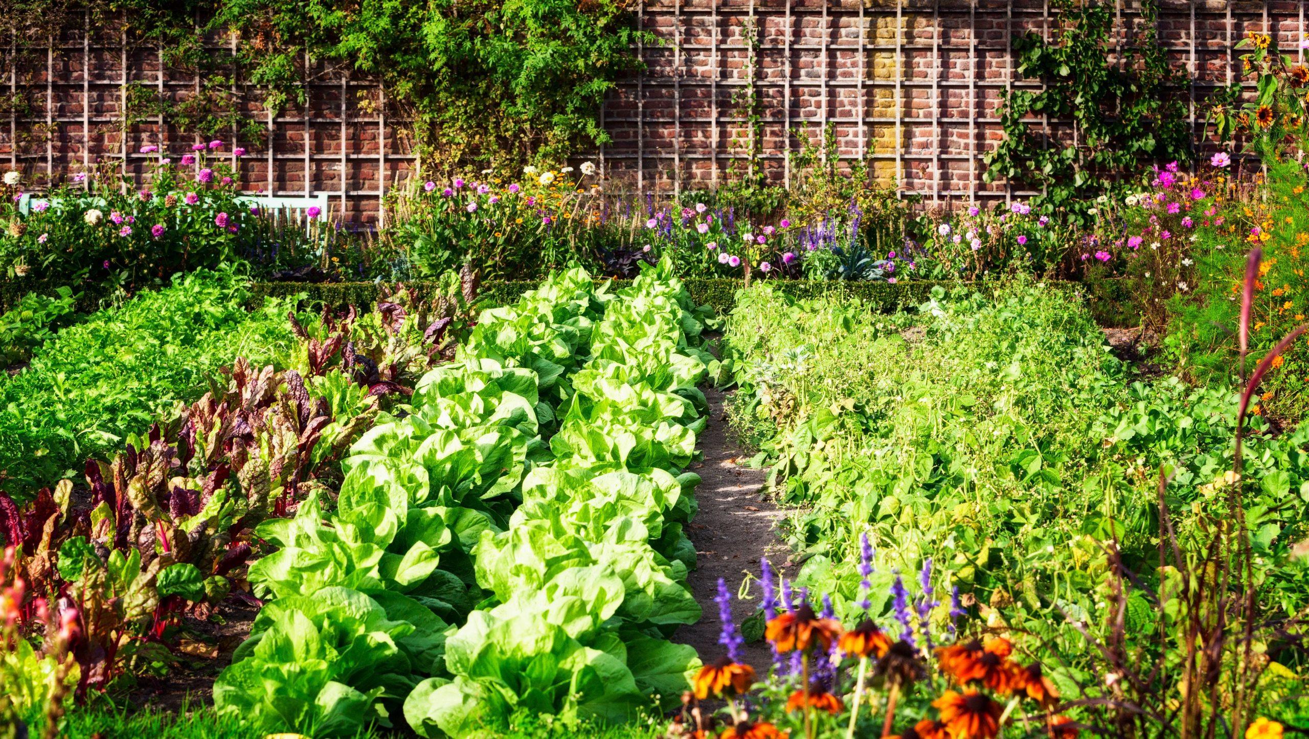 My First Veggie Garden: Intro to Vegetable Gardening- Virtual Workshop