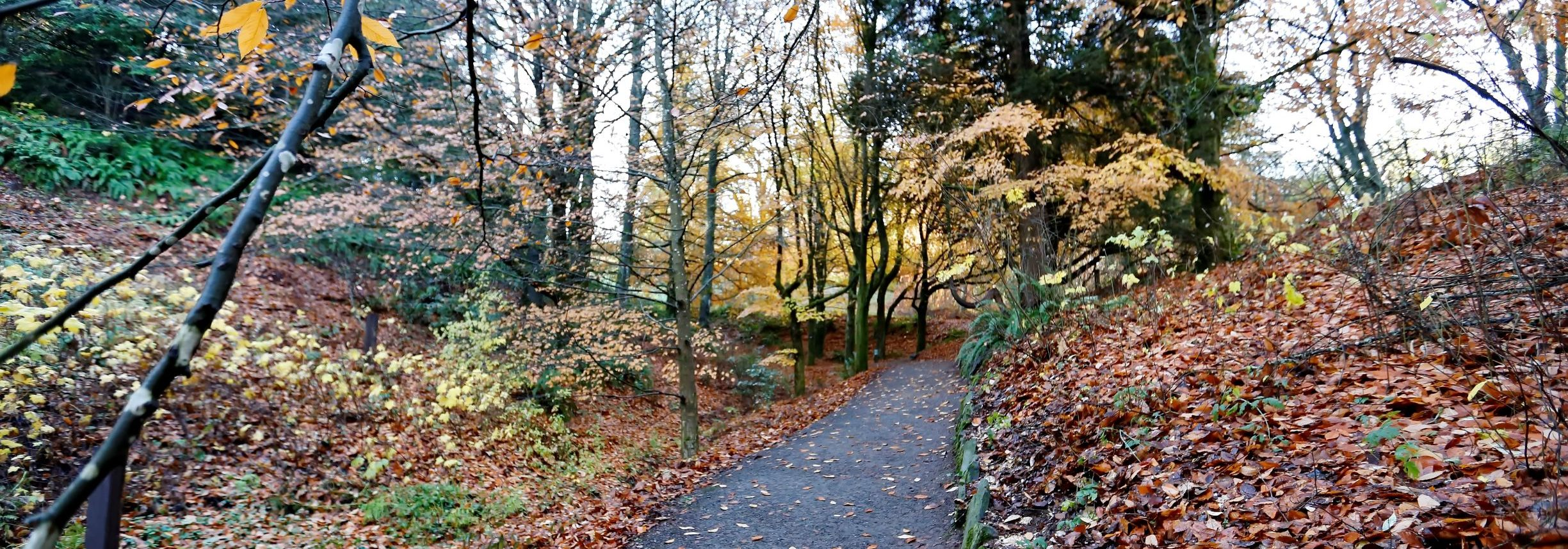 Forest Bathing Walk (In-Person)