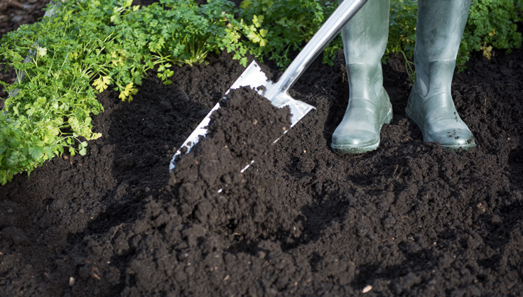 Best Soil, Healthy Plants- Virtual Workshop