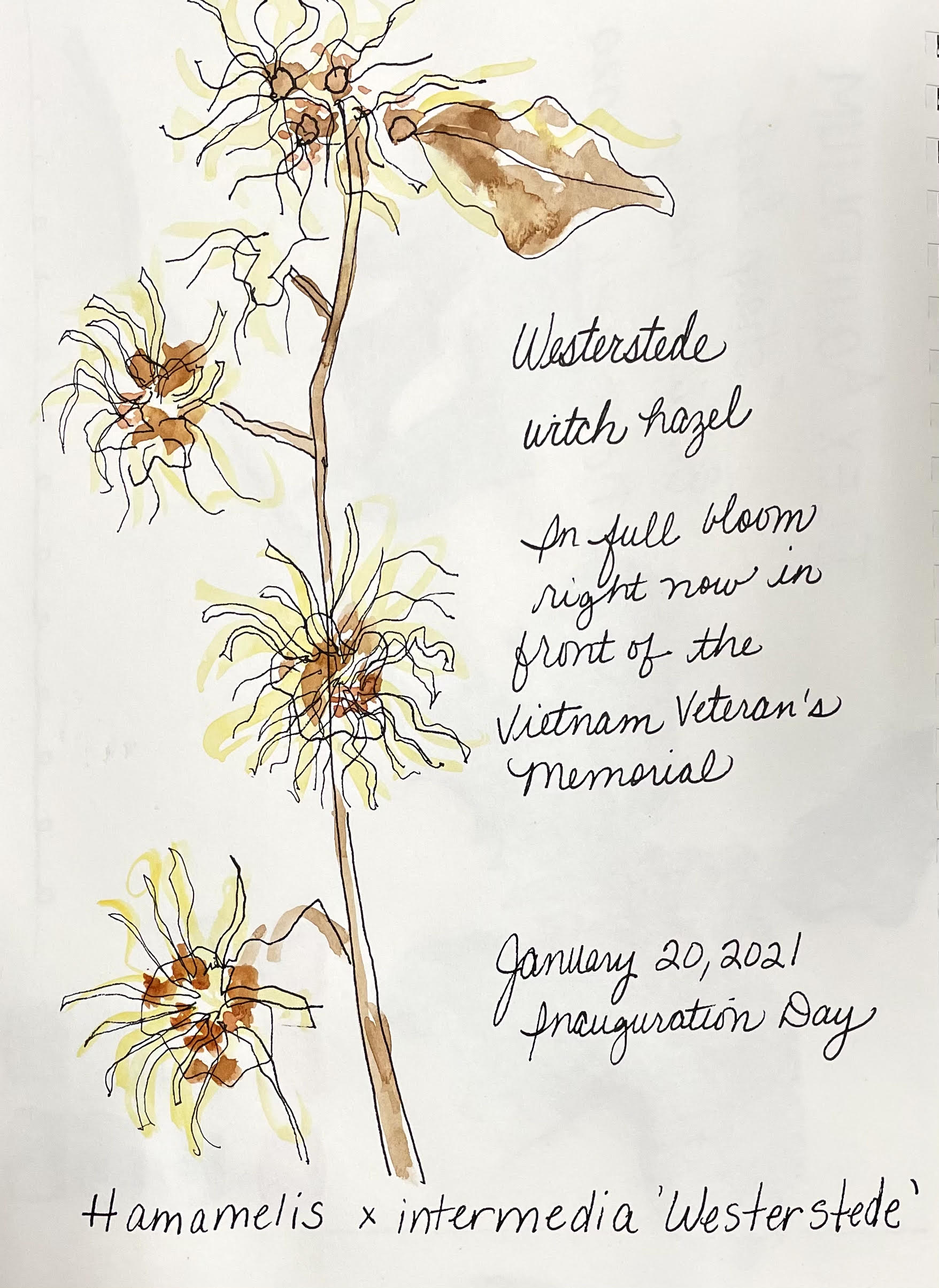 Nature Journaling (In-Person at Hoyt Arboretum)