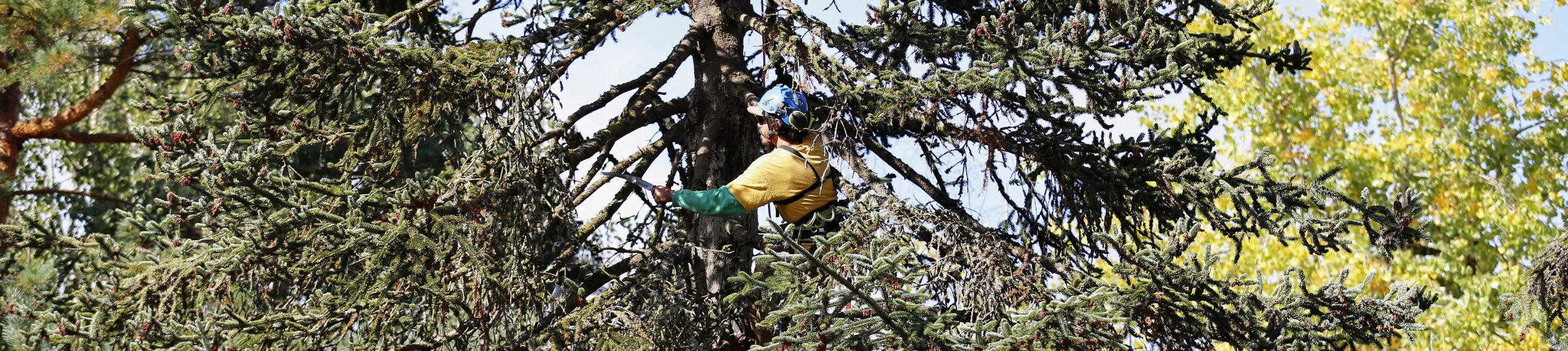 Arborist Partner Program