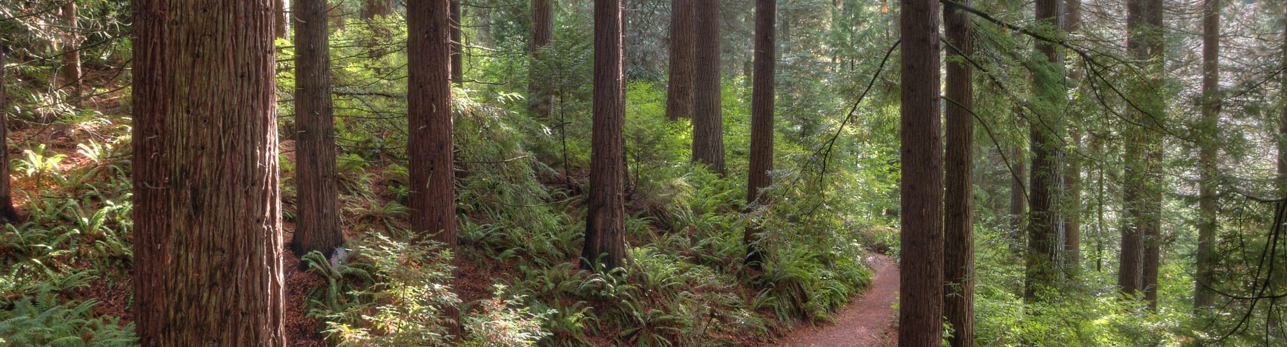 Senior Hike – Big Trees