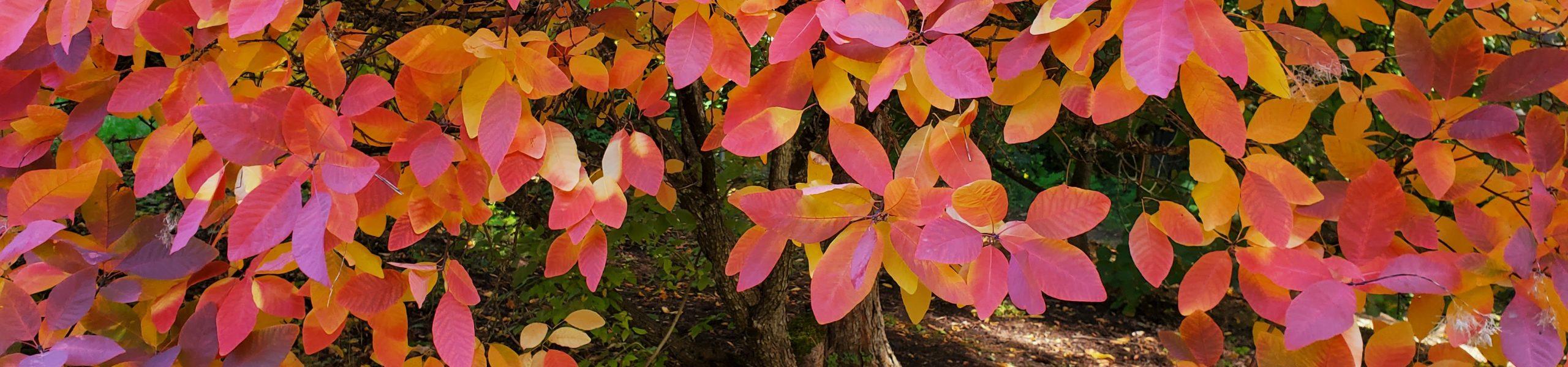 October Highlights