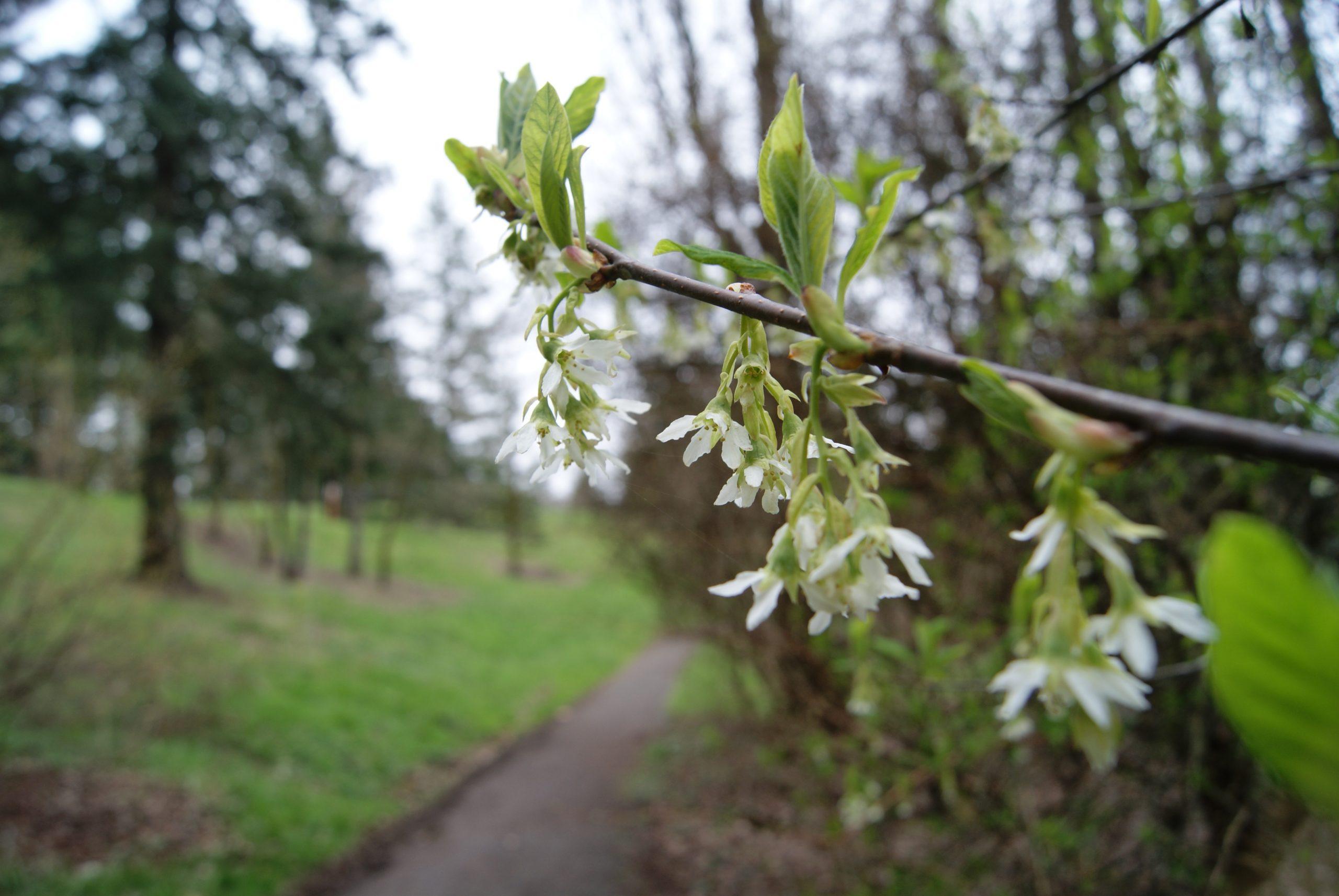 Guided Hike of Hoyt Arboretum